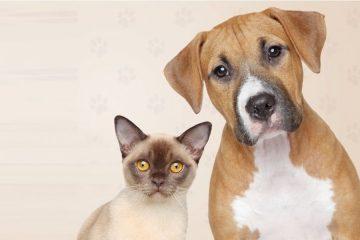 Rafard terá vacinação antirrábica em cães e gatos na próxima semana
