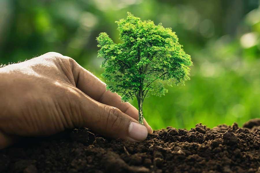 Read more about the article Moradores devem estar atentos à nova Lei de Arborização em Rafard