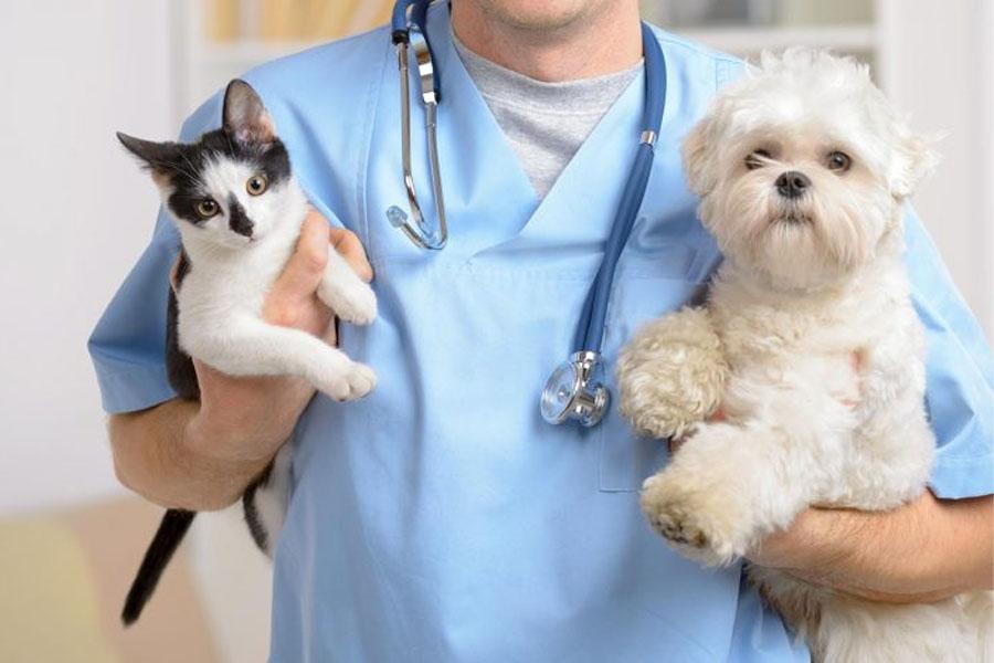 Rafard programa mutirão de castração de cães e gatos para outubro